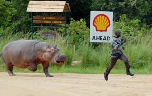 Hippo-running-funny